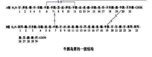 结构,即该段肽链主链骨架原子的相对空间位置,并不涉及氨基酸残基侧链
